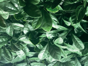 Jardin Vertical Artificial Pvc Muro Verde Decoredes Verde (6091)